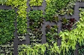 Green wall, eco friendly vertical garden background