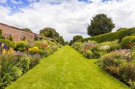 Long herbaceous border in an walled garden with perennial flowering plants.