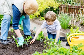 Cute Little Preschool Kid Boy And Grandmother Planting Green Sal
